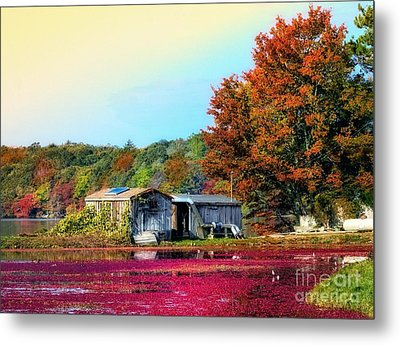 Metal Print featuring the photograph Farming Cranberries by Gina Cormier
