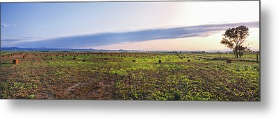 Farms At Sunset, Vale, Butte County Metal Print by Panoramic Images