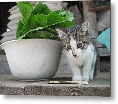 Farmstand Kitten Metal Print by Kim Kornbacher