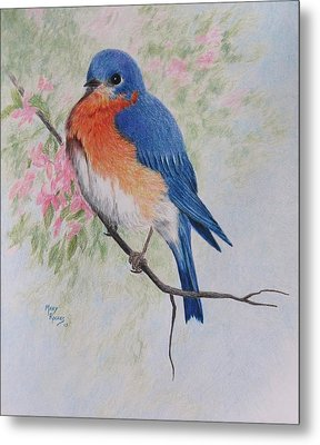 Fat And Fluffy Bluebird Metal Print by Mary Rogers