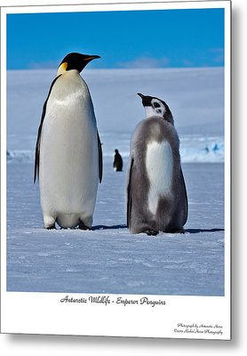 Father And Son Metal Print by David Barringhaus