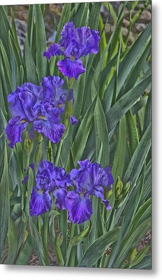 Faux Painted Irises Metal Print by Penny Lisowski