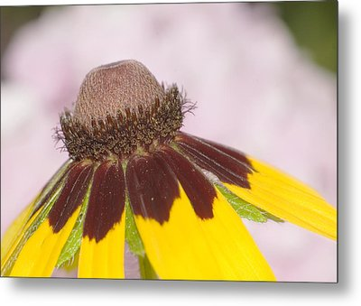 Metal Print featuring the photograph Favorite Flower by Robert Culver