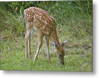 Fawn Metal Print by Greg Vizzi