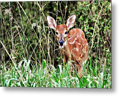 Fawn In The Grass Metal Print by Marty Koch