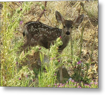 Fawn In Thistles Metal Print by Feva  Fotos