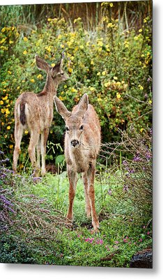 Metal Print featuring the photograph Fawns Eating Flowers by Peggy Collins