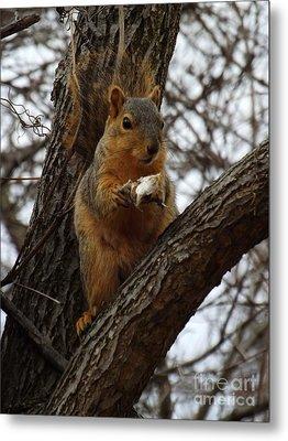 Feasting On Fish Fox Squirrel Metal Print by Sara  Raber