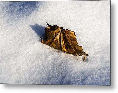 Feather Bed Of Snow Metal Print