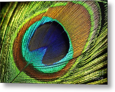 Feather Metal Print by Mark Ashkenazi