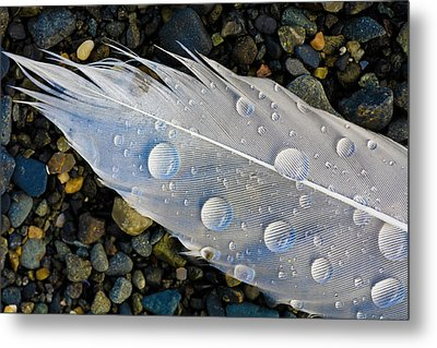 Feather On Beach Metal Print