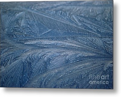 Feathered Blue Metal Print