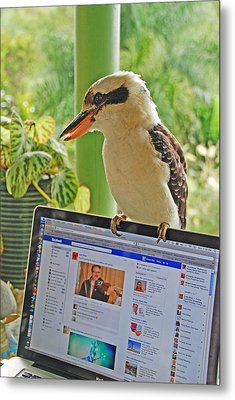 Feathered Facebook Fan Metal Print