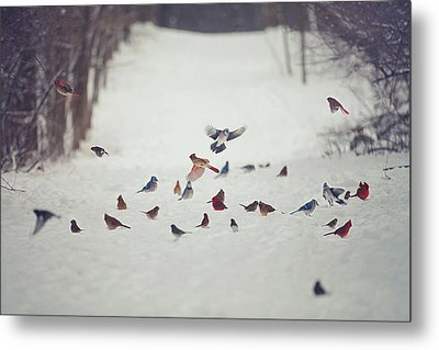 Feathered Friends Metal Print by Carrie Ann Grippo-Pike