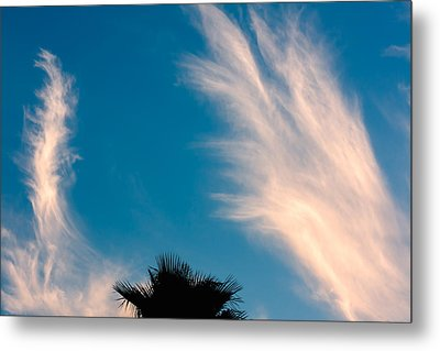 Feathered Horns Metal Print