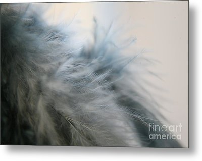 Metal Print featuring the photograph Feathered  by Lynn England