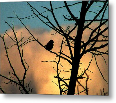 Feathered Silhouette Metal Print