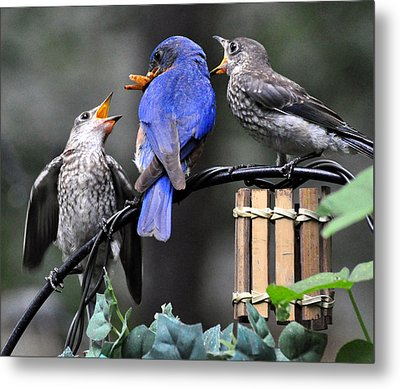 Feed Me Metal Print by Gail Butler