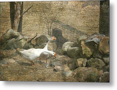 Feeding Geese   Metal Print
