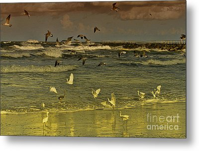Feeding Frenzy Metal Print by Deborah Benoit