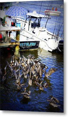Metal Print featuring the photograph Feeding Frenzy by Laurie Perry