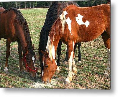 Feeding Horses Metal Print by Cathy Harper