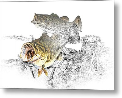 Feeding Largemouth Black Bass Metal Print by Randall Nyhof