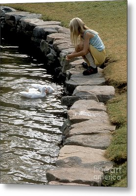 Metal Print featuring the photograph Feeding The Ducks by ELDavis Photography