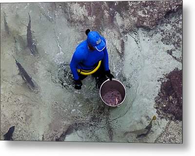 Feeding The Sharks Metal Print by Susan Stone
