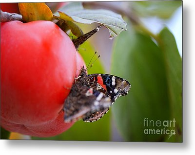 Metal Print featuring the photograph Feeding Time by Erika Weber