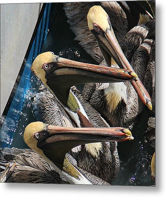 Metal Print featuring the photograph Feeding Time by Oscar Alvarez Jr
