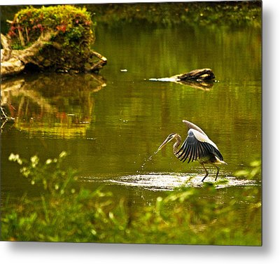 Feeding Time Wil 350 Metal Print