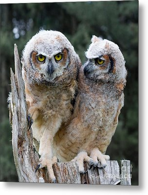 Feeling A Little Grumpy Are We? Metal Print by Barbara McMahon