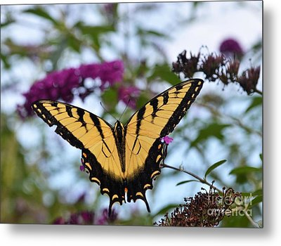Metal Print featuring the photograph Feeling Pretty II by Judy Wolinsky