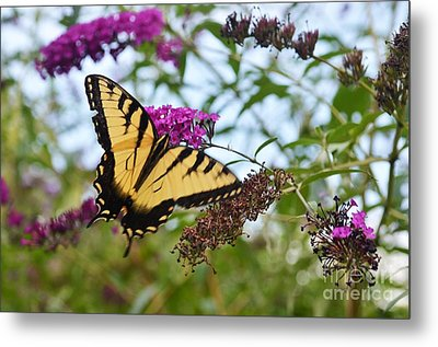 Metal Print featuring the photograph Feeling Pretty by Judy Wolinsky