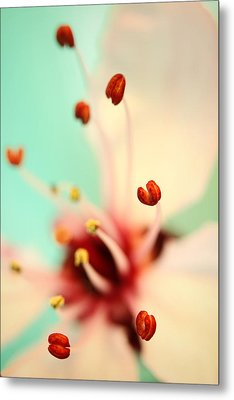 Metal Print featuring the photograph Feeling Spring by Sharon Johnstone
