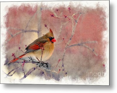 Female Cardinal Portrait Metal Print by Dan Friend