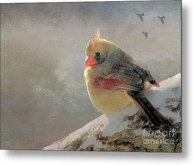 Female Cardinal V Metal Print by Janette Boyd