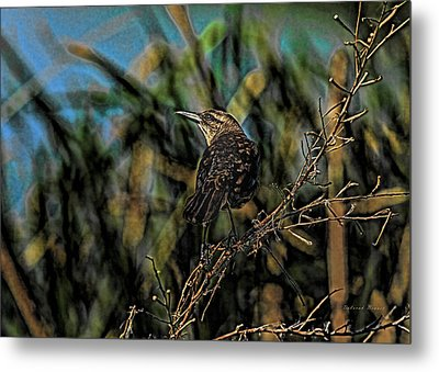 Female Grackle On The Dark Side Metal Print by Deborah Benoit