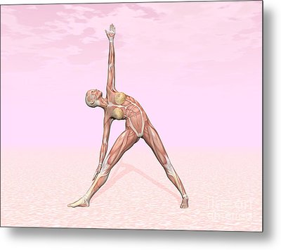 Female Musculature Performing Triangle Metal Print by Elena Duvernay