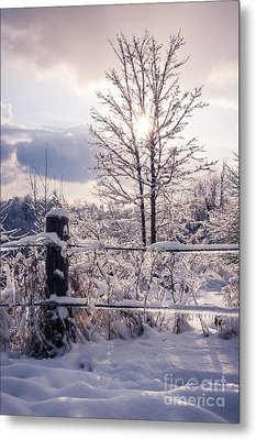 Fence And Tree Frozen In Ice Metal Print by Elena Elisseeva