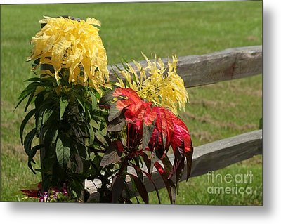 Fence Line Blossoms Metal Print by Theresa Willingham