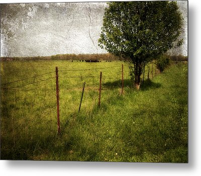 Fence With Tree Metal Print by Cynthia Lassiter