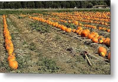 Metal Print featuring the photograph Fencing The Pumpkin Patch by Michael Gordon