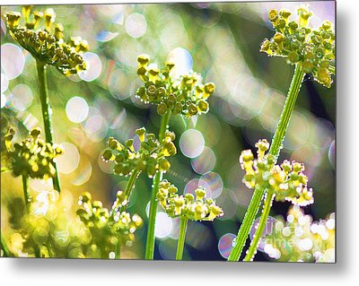 Metal Print featuring the photograph Fennel Morning Dew by Rebeka Dove