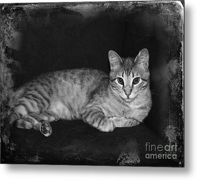 Feral Cat Day Metal Print