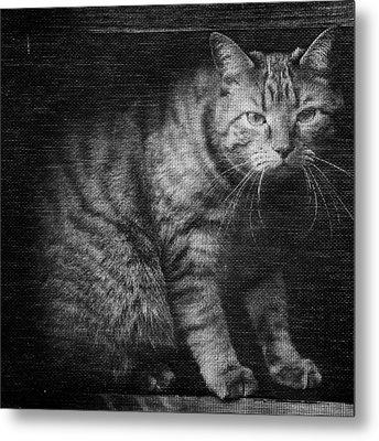 Fergus The Indoor Cat B Metal Print by Patrick M Lynch