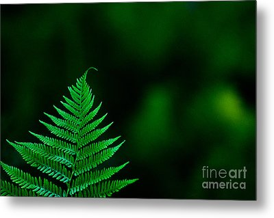Fern 2012 Metal Print by Art Barker
