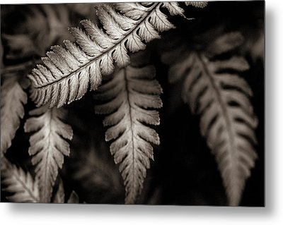 Fern Metal Print by Arkady Kunysz