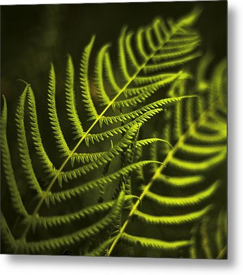 Metal Print featuring the photograph Fern by Bradley R Youngberg